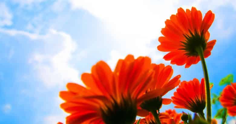 viver no campo - Flores vermelhas e nuvens