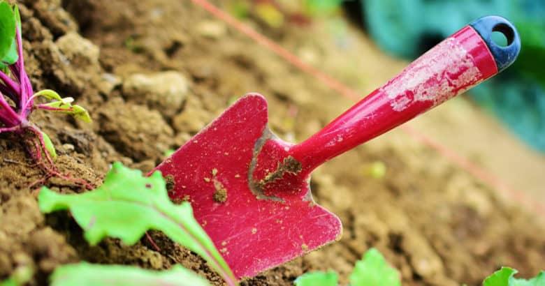 jardinagem fonte de terapia