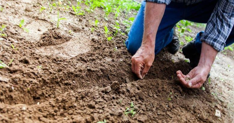 Aprenda a plantar | Como deixar a cidade e arriscar uma vida no campo