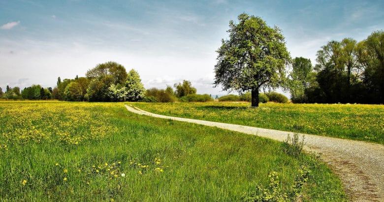 Escolha um local adequado para viver | Como deixar a cidade e arriscar uma vida no campo