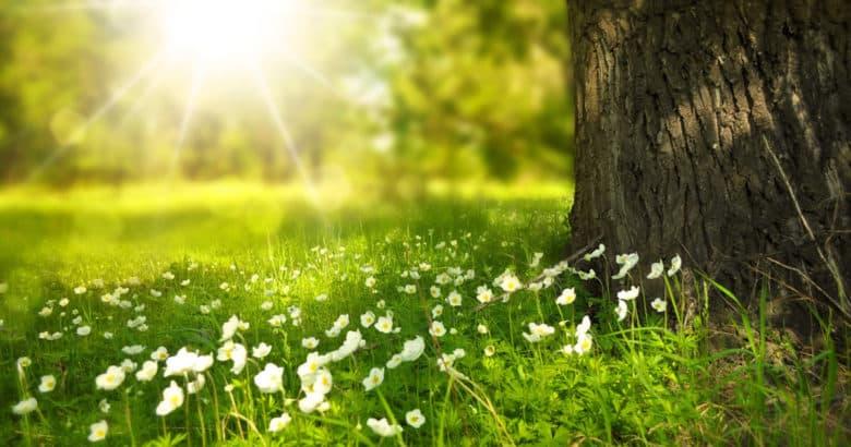 Featured Image | O que podemos aprender com a natureza