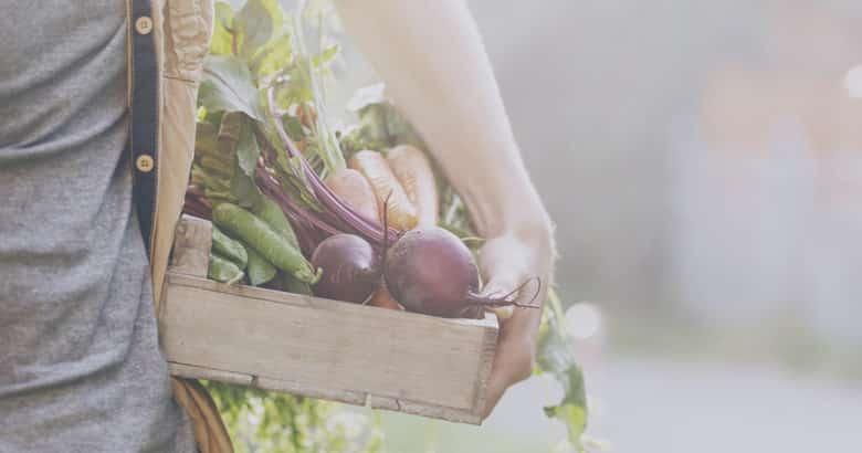 obter dinheiro no campo - fazendeiro adulto homem segurando fresco tempero legumes caixa de madeira jardim inicio da manha