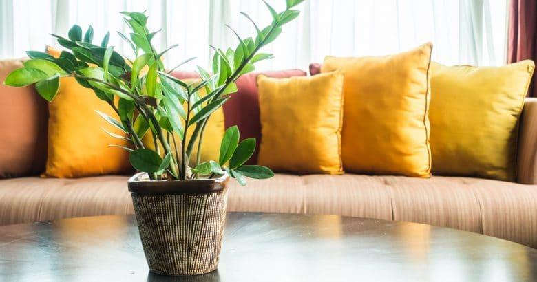decoração campestre | Planta vaso
